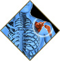 Orthopaedic Health Group - Shoulder